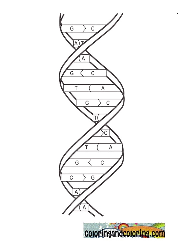 genetics coloring pages - photo#2