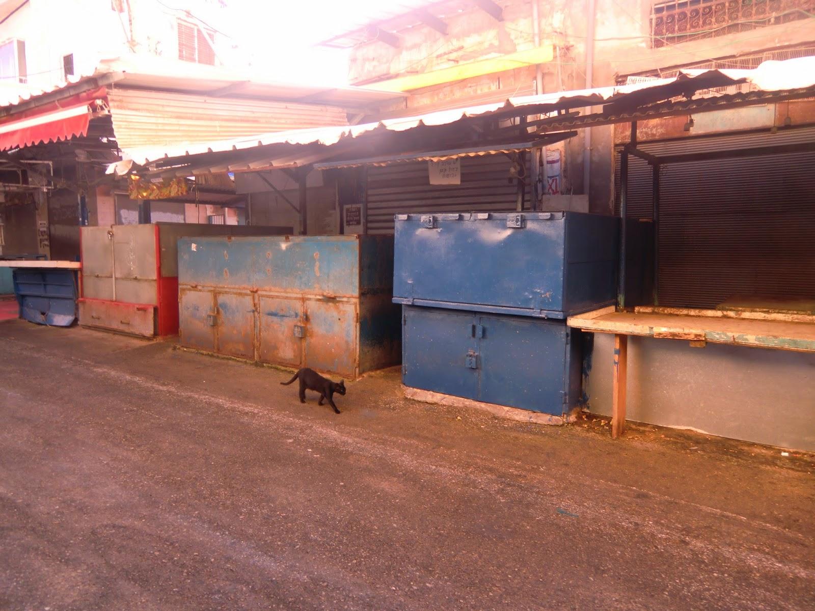 Коты-Тель-Авив
