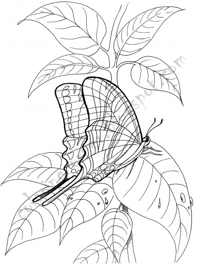 Butterfly And Fairy Coloring Pages