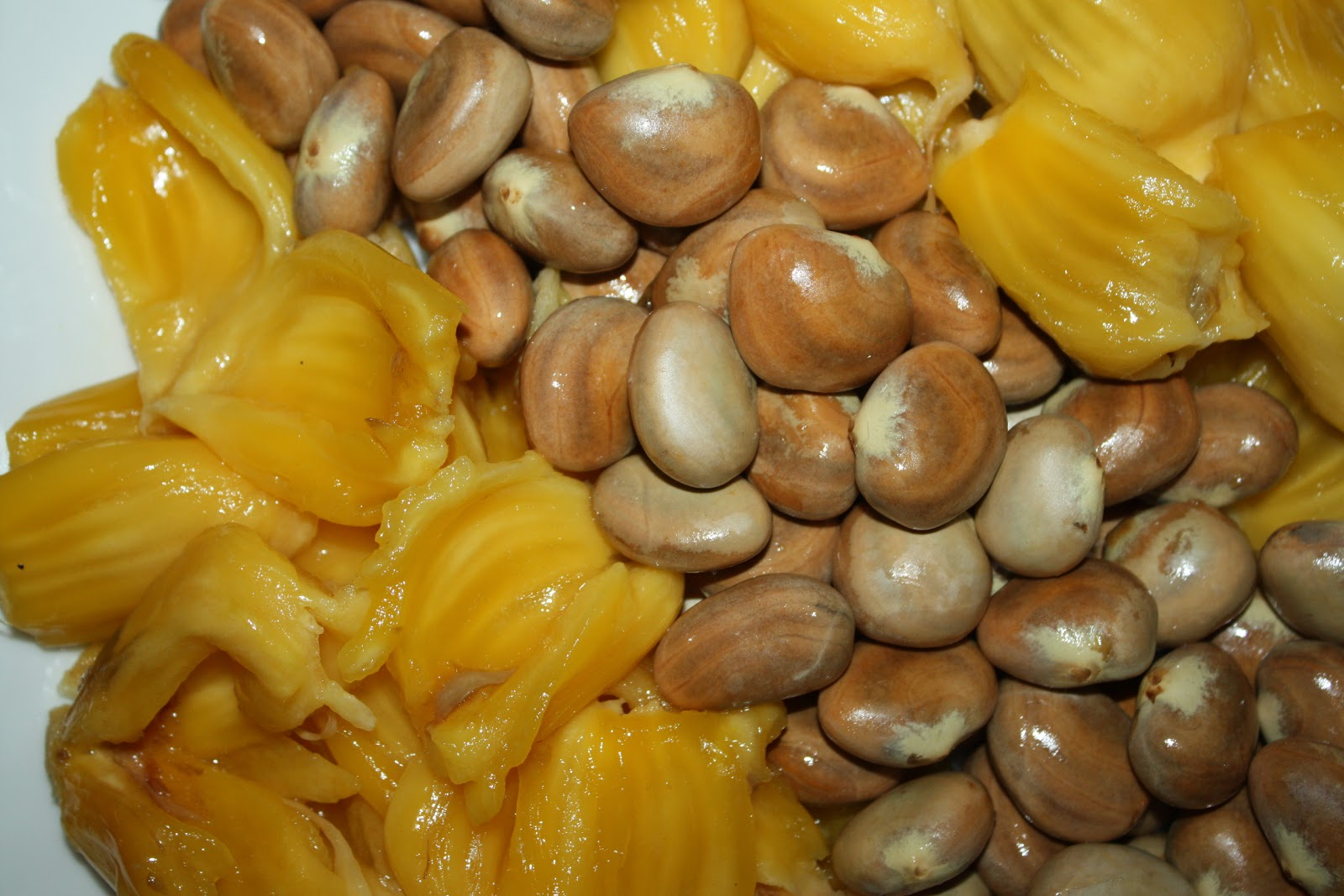 in jackfruit spines are modifications of