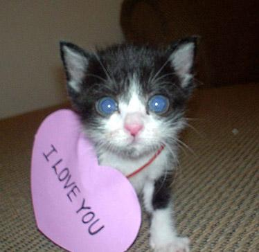 2019 year look- Love i cute you cat pictures