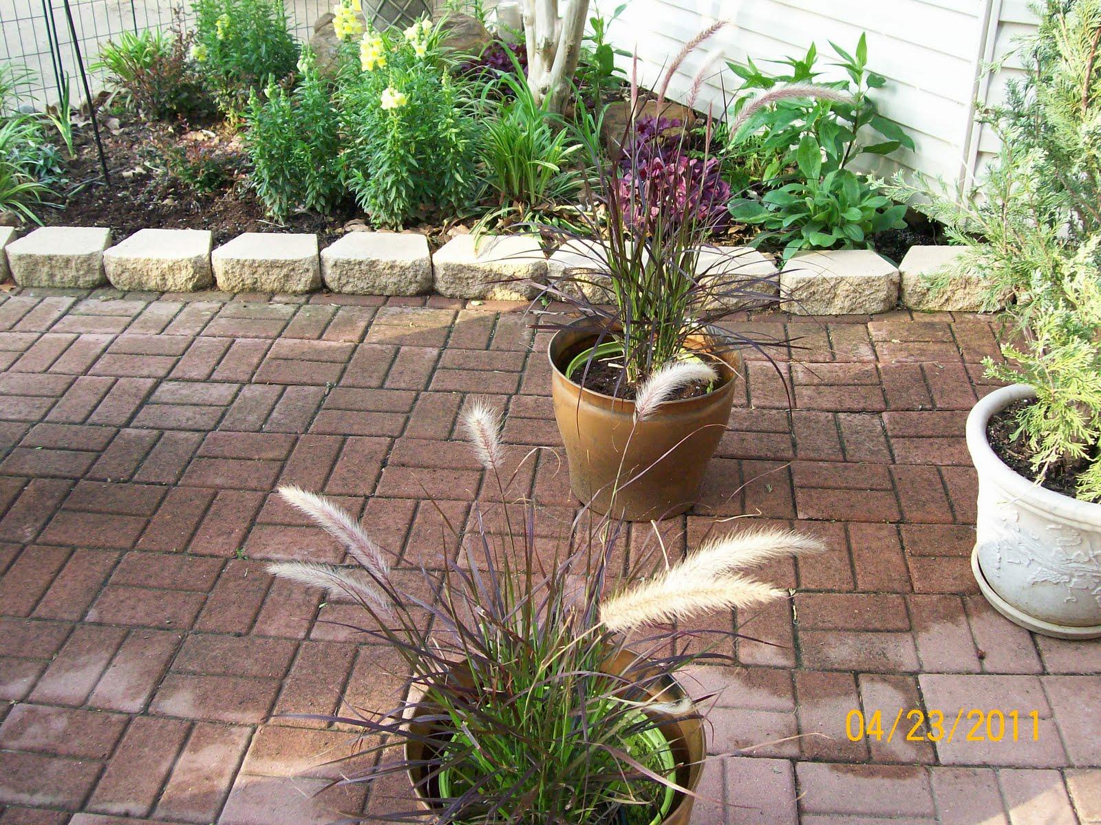 Amateur gardener purple fountain grass for Grasses for flower beds