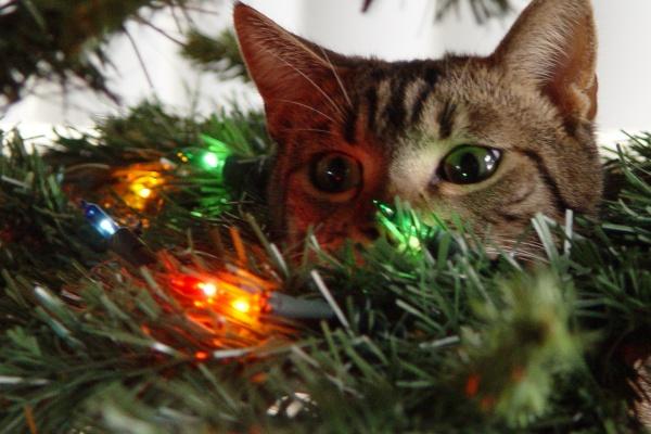 Новогодний кот возле елки