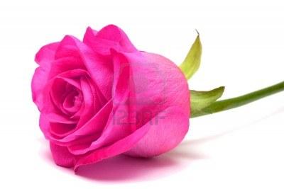 El diario de rachel significado de las rosas seg n su color - Significado de los colores de las rosas ...