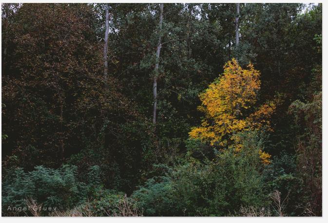 Fine Art print photo,Autumn tree photograph,Print photography