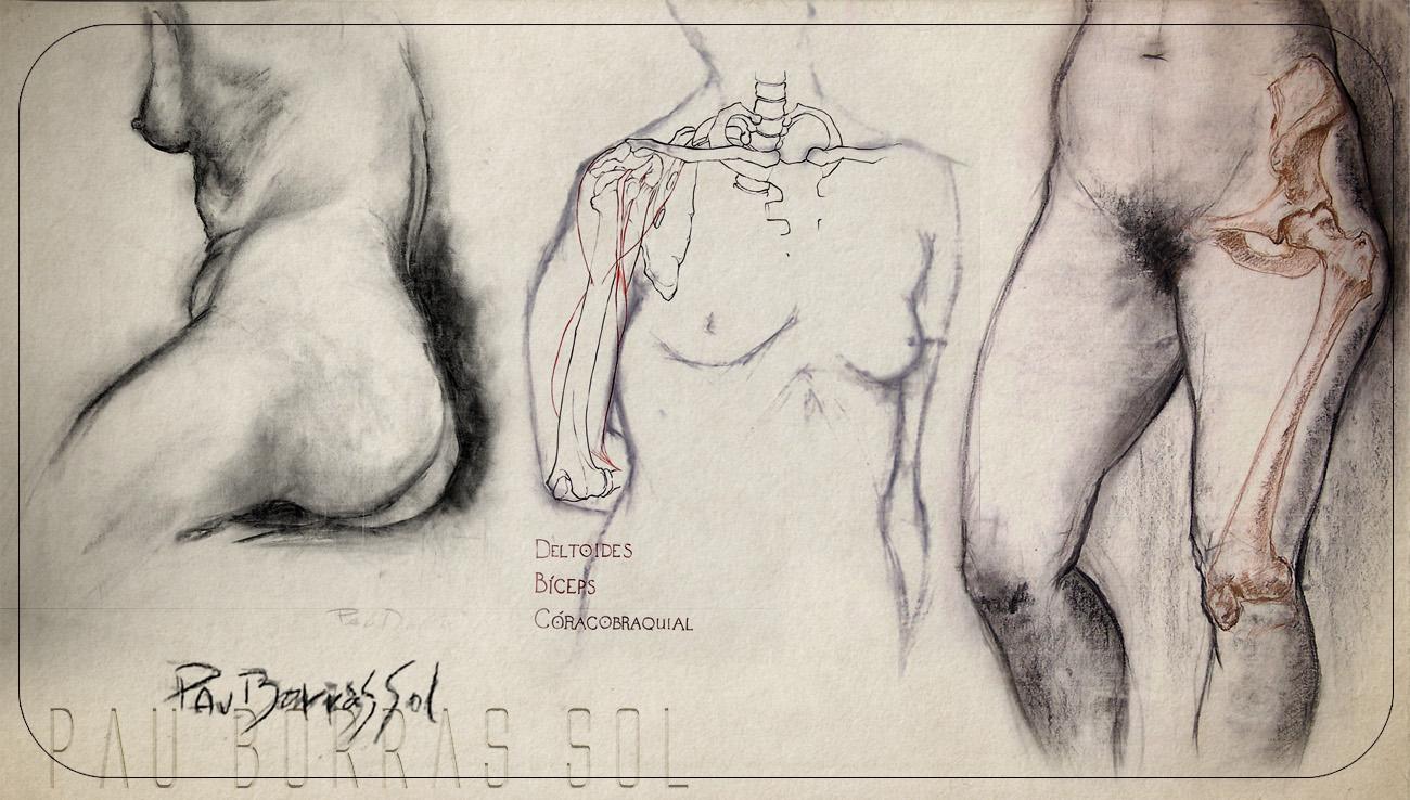 Ars Fictum: Human Figure Studies II: Anatomy