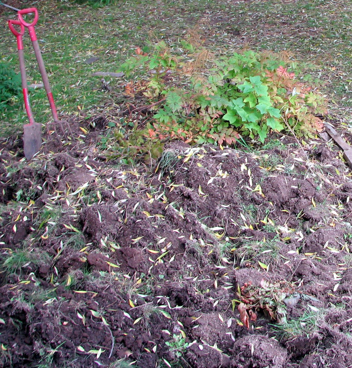 Trädgårdsprinsessans dagbok: permakultur