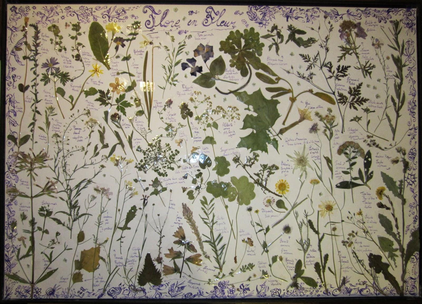 artiste en herbes flore en fleur. Black Bedroom Furniture Sets. Home Design Ideas