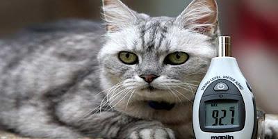 Kucing Paling Berisik