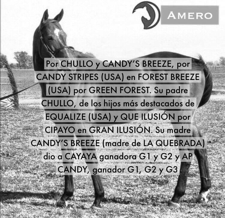HS LUNA NUEVA - AMERO