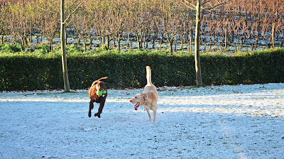 Flying Dogs To Italy : Boomer and Harley playing catch under the Tuscan sun at Borgo del Molinello