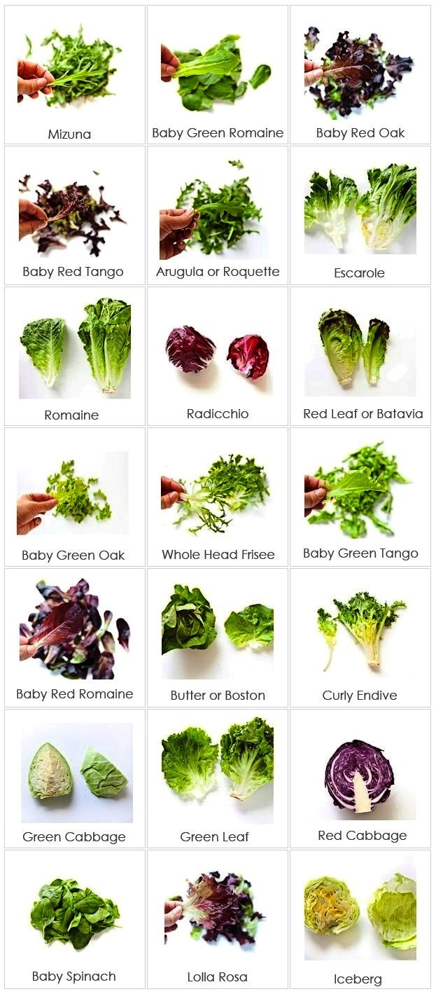 Image Gallery Lettuce Types Of Heart