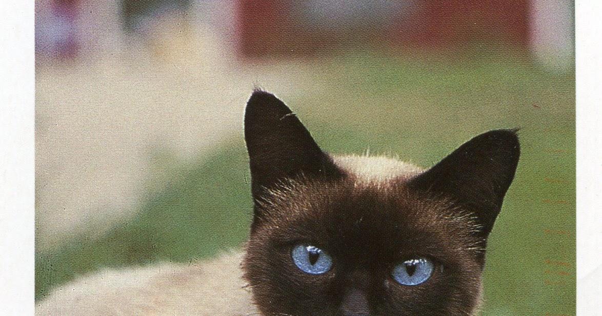 Cat  Or Cat E