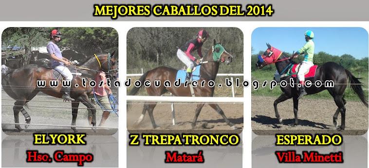 CABALLOS 2014
