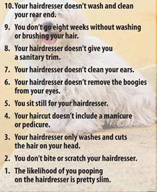 Critter Gossip Reasons Why Your Dogs Haircut Costs More