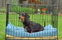 imobilização em cães