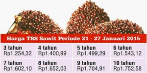 palm oil price