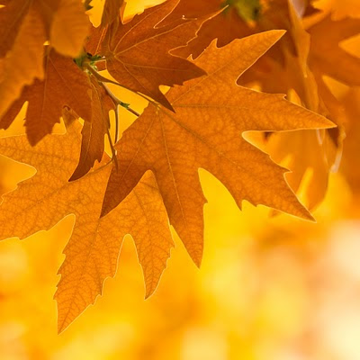 Autumn leaves download free wallpapers for Apple iPad