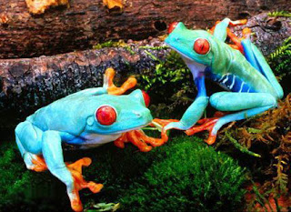 brightly colored frogs