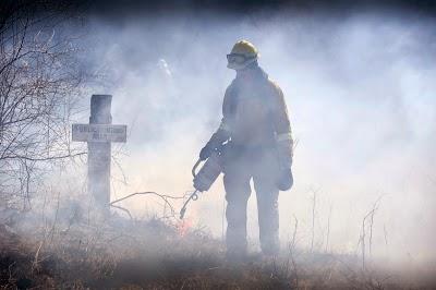 Showcasing the Michigan DNR: Prescribed burns ignite Michigan wildlife habitat growth