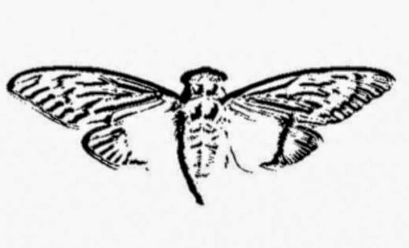 Cicada 3301  logo