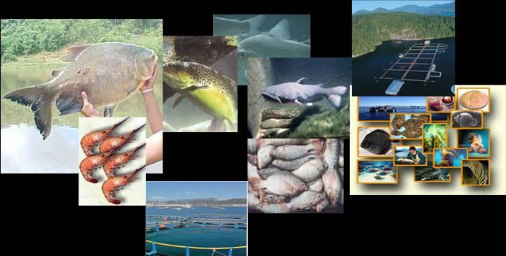 Guia de acuicultura produccion de peces en estanques for Produccion de peces en estanques