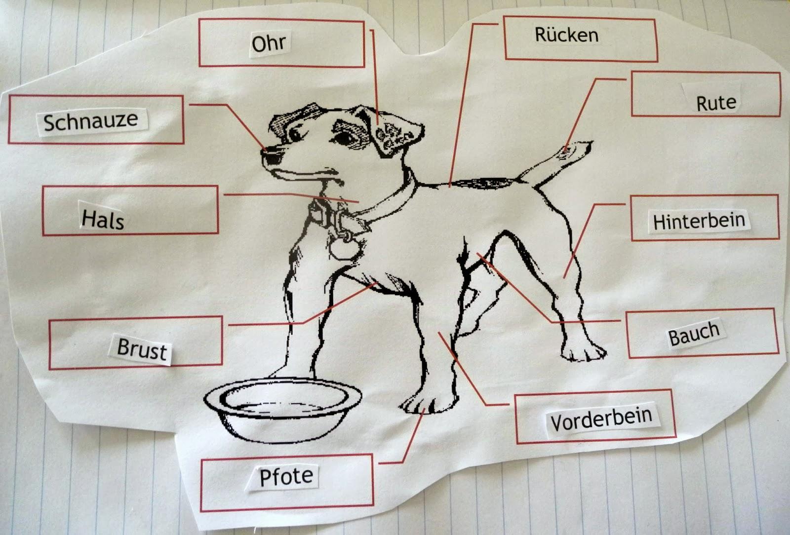 Groß Hund Bauch Anatomie Galerie - Menschliche Anatomie Bilder ...