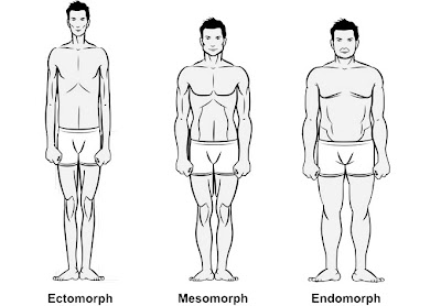 http://www.muscleandstrength.com/articles/body-types-ectomorph-mesomorph-endomorph.html