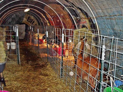 Granny S Best The New Kidding Barn