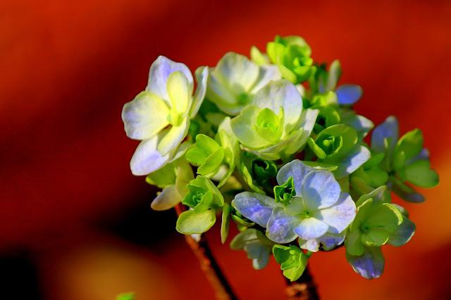 Flores brancas e azuis, brotos verdes e fundo laranja