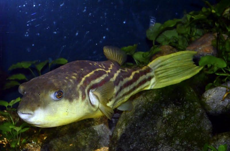 Photography In My Life Vancouver Aquarium