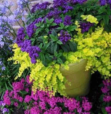 Fibermania container garden - Container gardens for sun ...