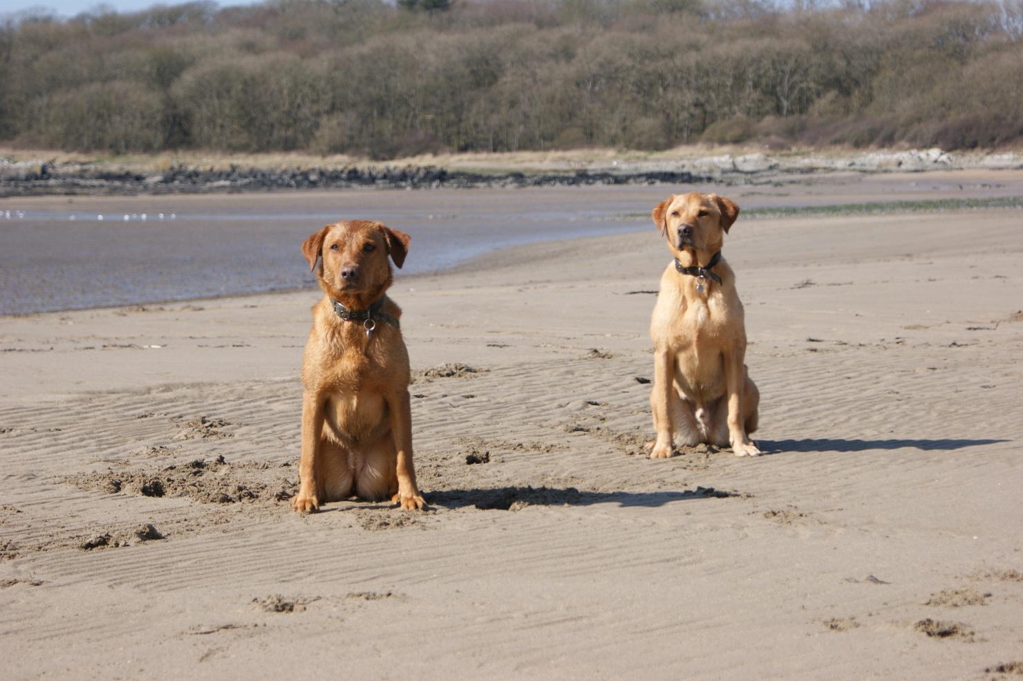 Dog Friendly Hotels In Kirkcudbright