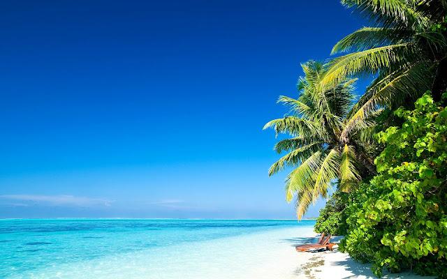Landschap met zee, strand en bomen