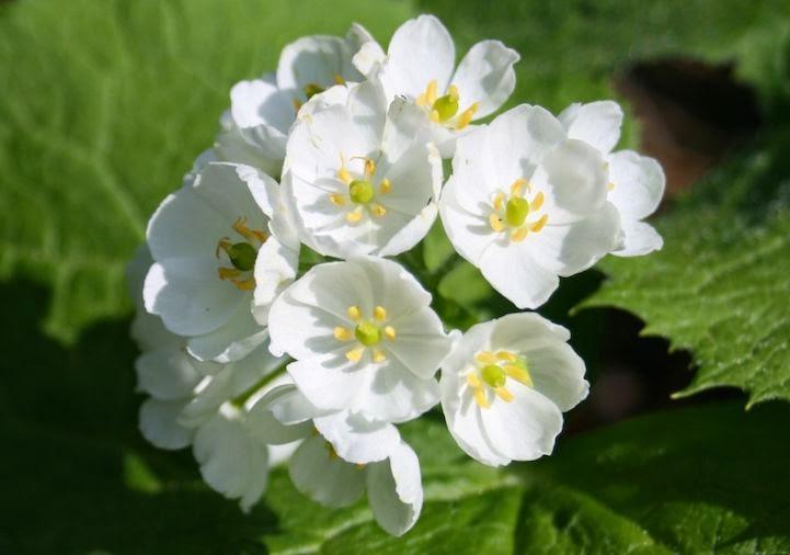 صورة تظهر الزهور وهي بيضاء