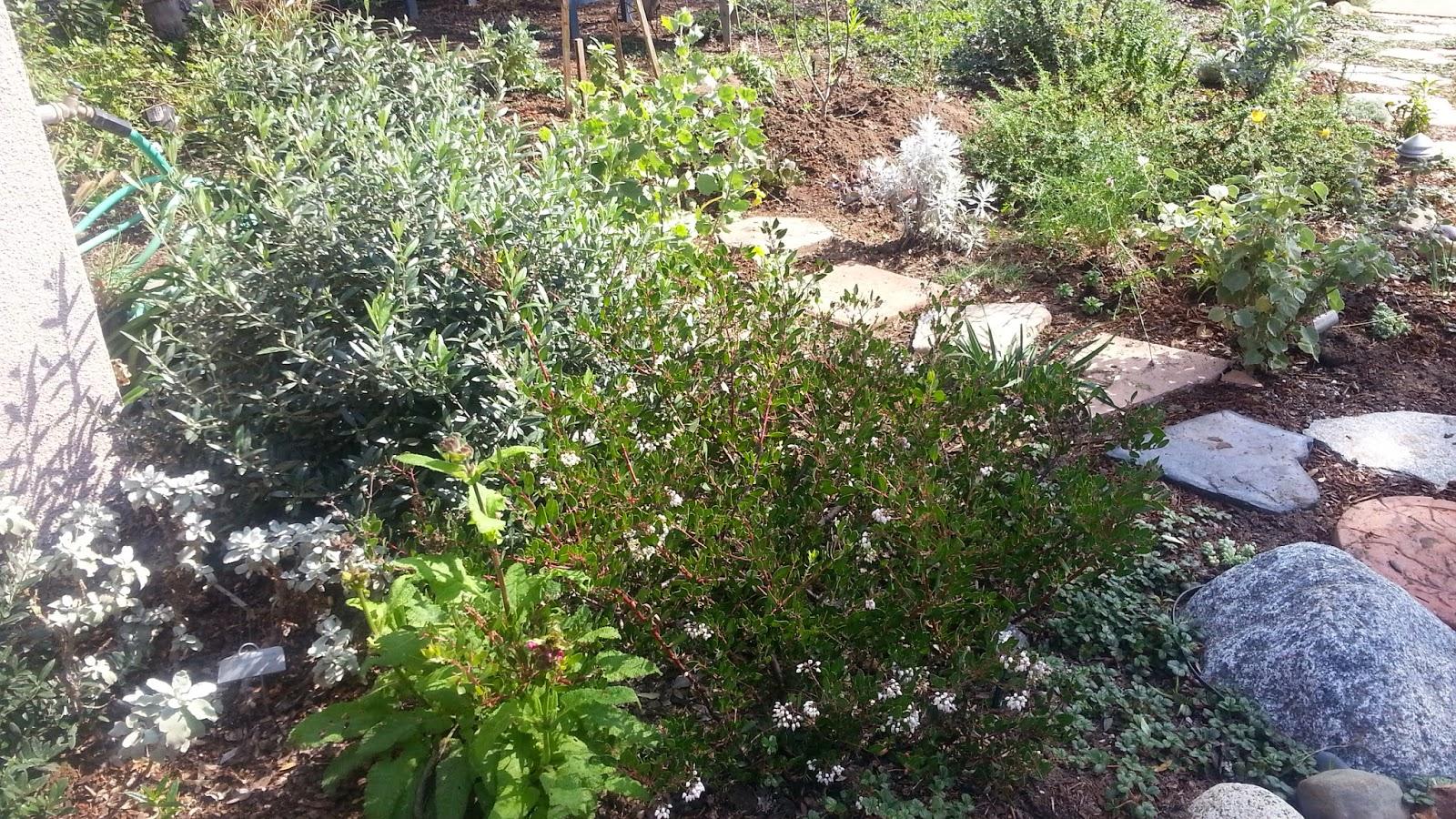 mar vista green garden showcase 12425 appleton way cluster 3h