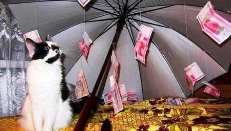 Стихи на свадьбу для подарка зонтика 794