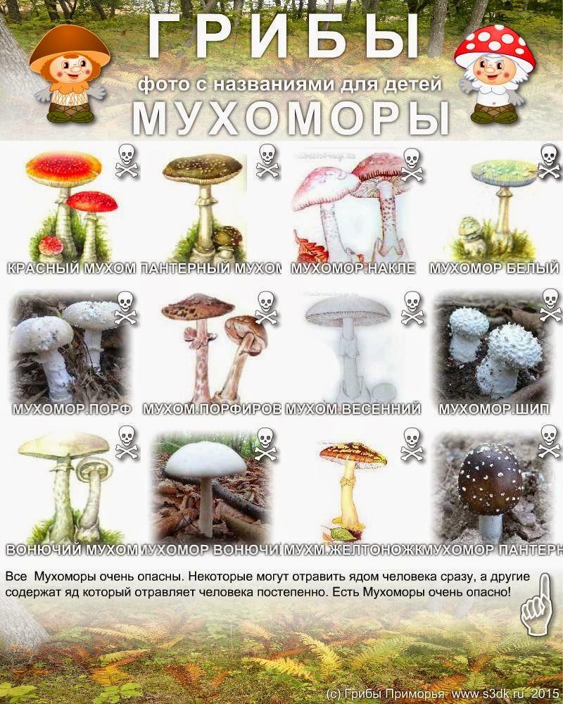 картинки с грибами с названиями