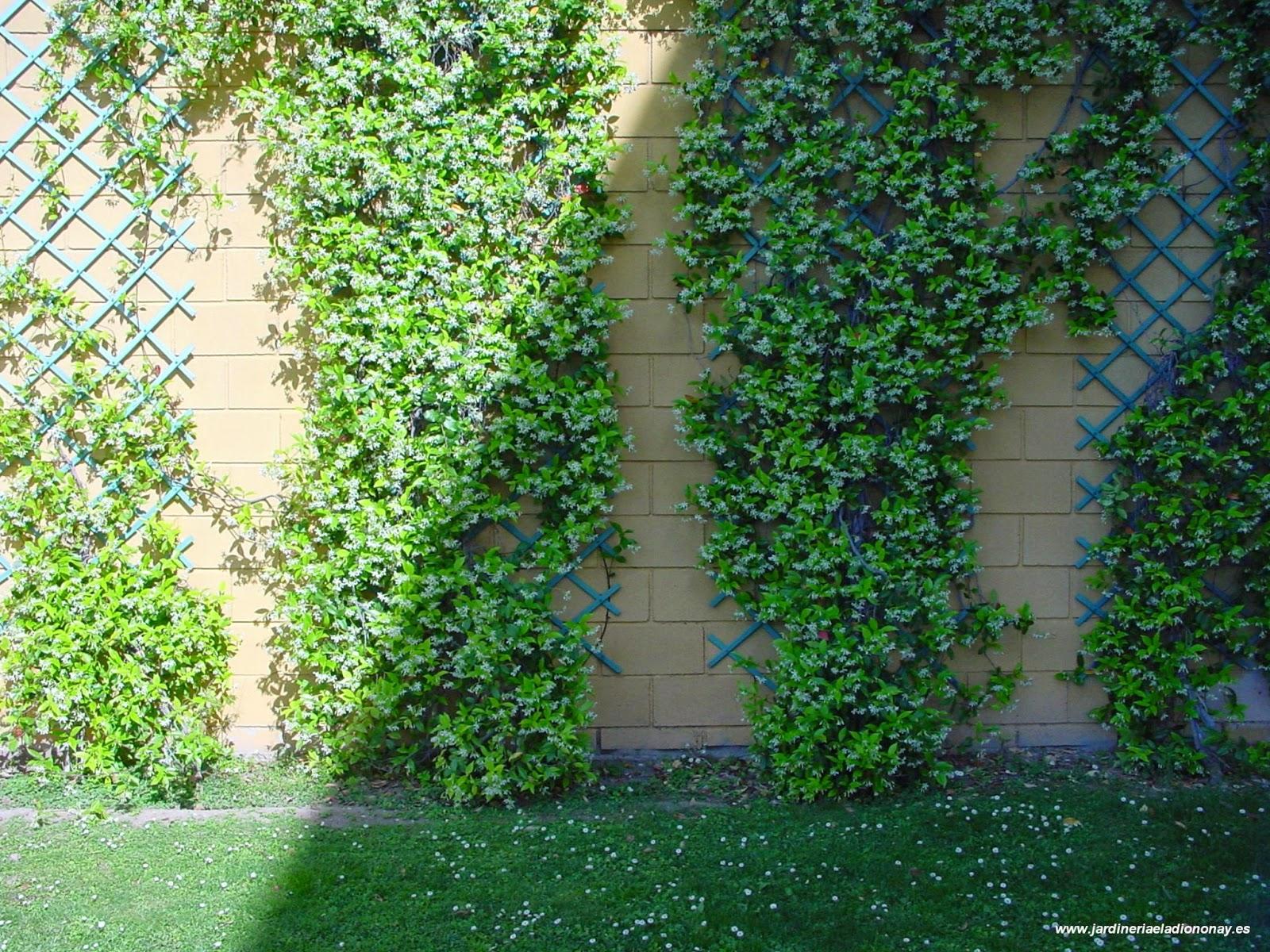 Jardineria eladio nonay junio 2013 for Plantas trepadoras para muros