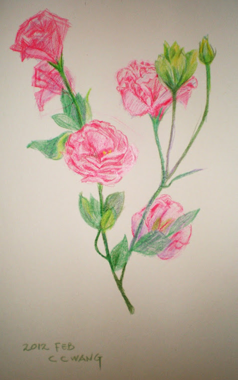 color pencil - flower