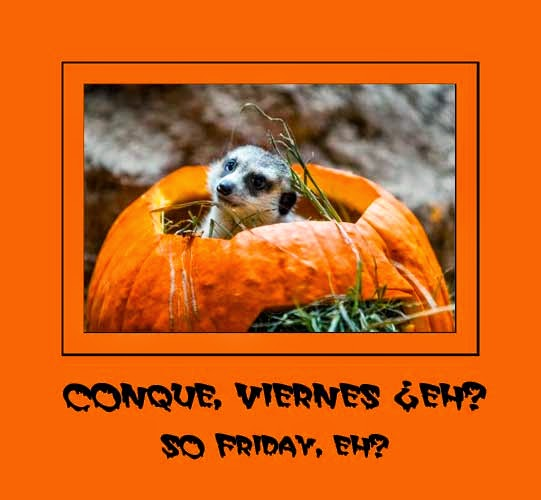 meerkat-pumpkin