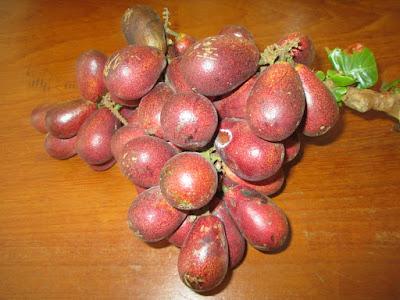 manfaat-buah-matoa.jpg