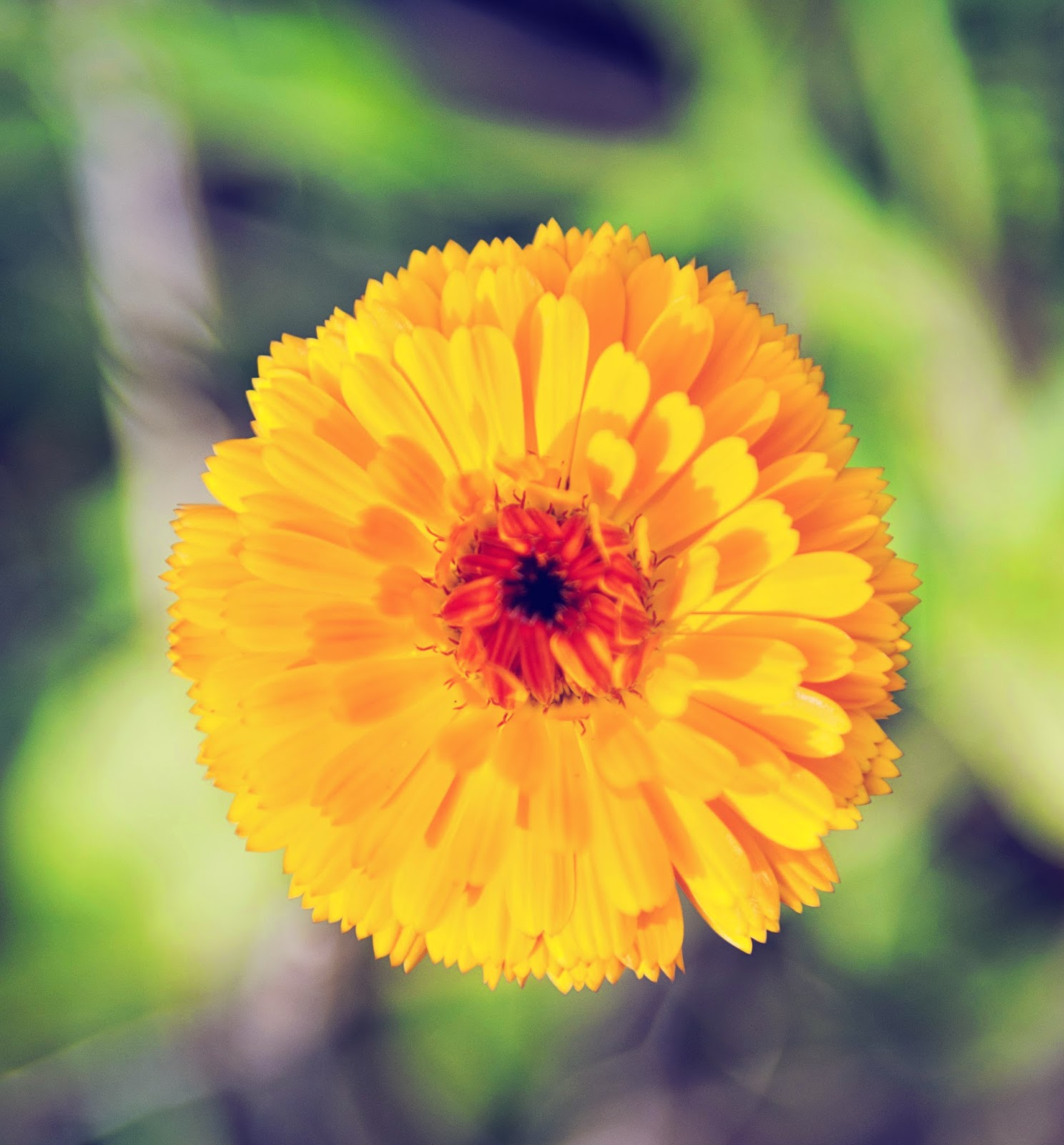 In and Out of the Garden Birth Flower For October Marigold