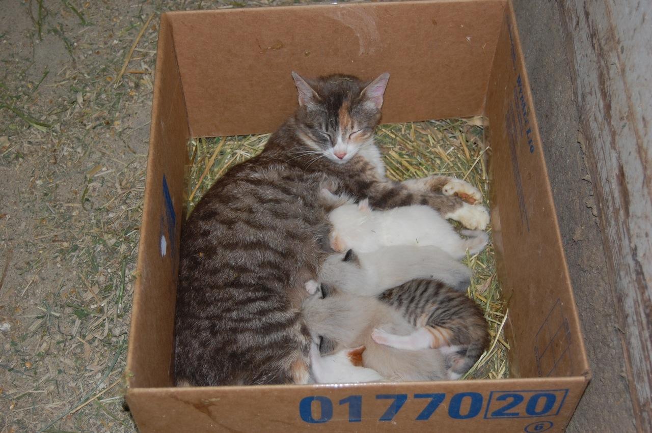 fun kitten names