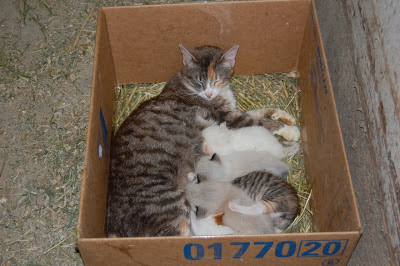 cat and kittens in box