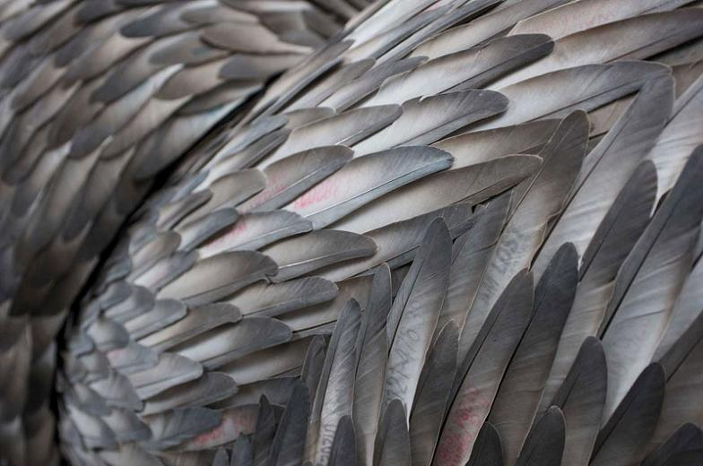 A close up of feathers.
