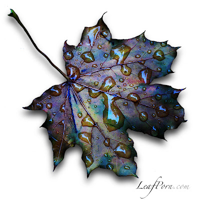 how to photograph leaves