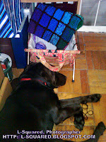 My chocolate Lab laying beside my crochet basket/bag that is filled with a partially completed rainbow rectangle rug.