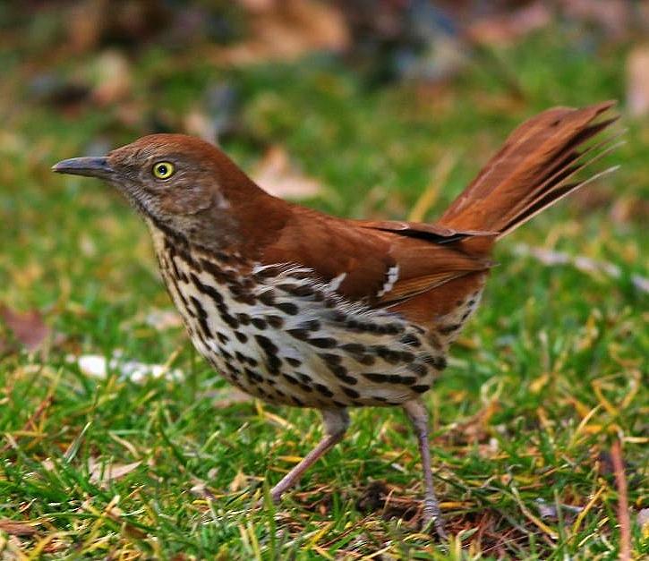 Brown Bird - Salt For Salt