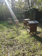 Rayon de soleil sur le rucher école